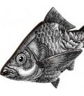 Pesce THE ENTREPRENEUR - MIHO