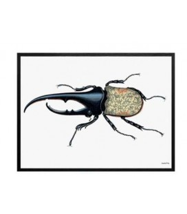 WILD BUG Quadretto 30X40 - Vanilla Fly